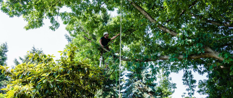 Tree Trimming Service Near Me