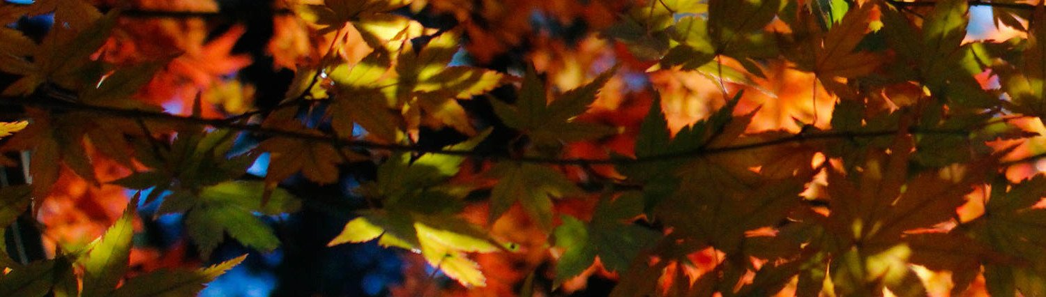 Beautiful Fall leaves in brown, golds, reds, and greens