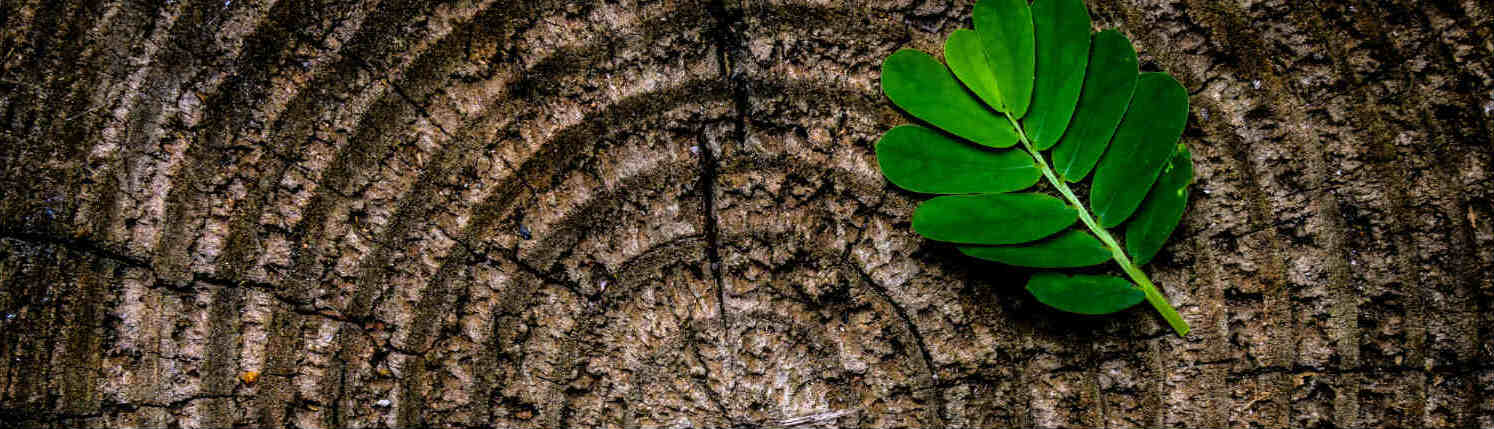 Small green leaf to the right sitting atop a cut tree trunk with age rings exposed