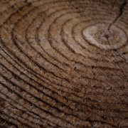 Close up of tree age rings