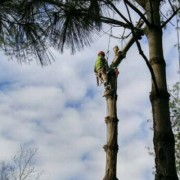 Staff member working on a tree removal