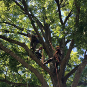 Several members of our team working together on a tree project