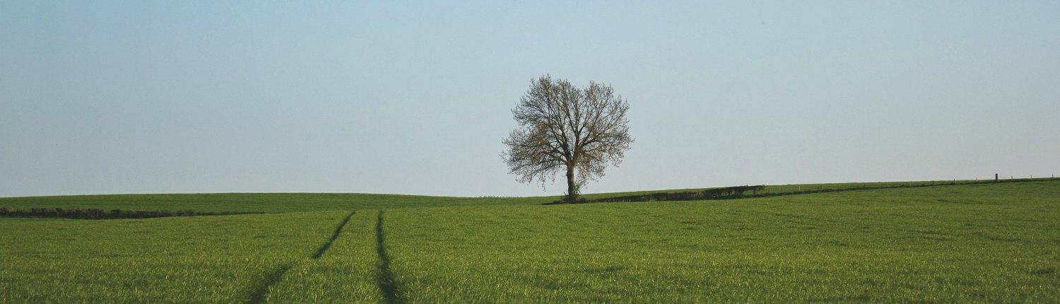 Photo of a field with a naked tree to the right with tire tracks in the center
