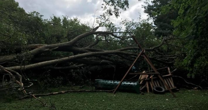 A tree that has fallen onto and crushed a swingset